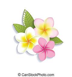flores, blanco, vector, plumeria, plano de fondo