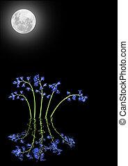 flores, bluebell, luz de la luna