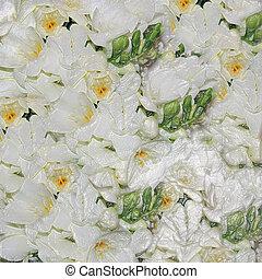 flores brancas, casório