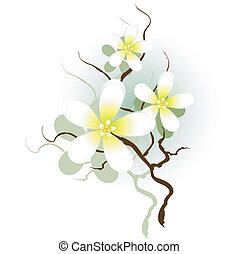 flores brancas, ramo