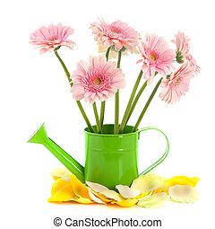 flores côr-de-rosa, aguando, verde, lata