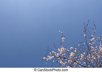 flores côr-de-rosa, arbusto