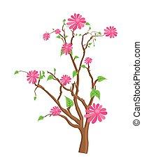 flores côr-de-rosa, caule