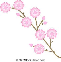 flores côr-de-rosa, ilustração