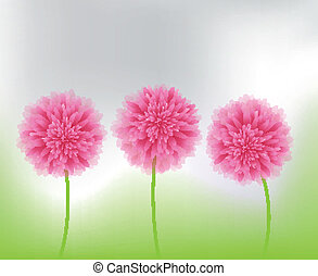flores côr-de-rosa, natureza