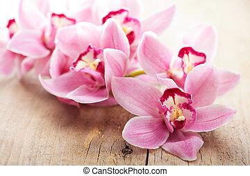 flores côr-de-rosa, orquídea