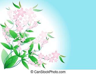 flores côr-de-rosa, ramos