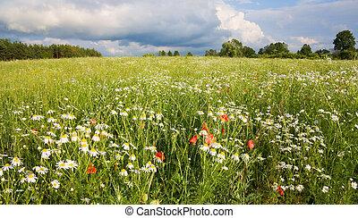 flores, campo, paisagem, verão
