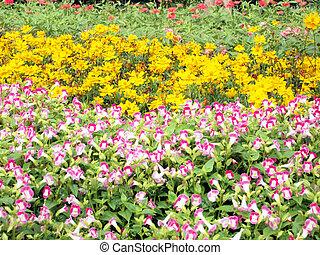 flores, campo, plano de fondo