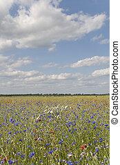 flores, campos