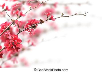 flores cereja