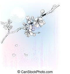 flores cereja, em, flor cheia