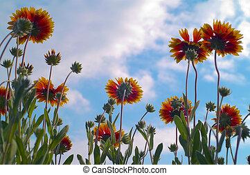 flores, cielo
