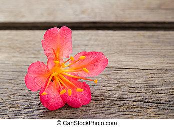 flores, cima fim, cor-de-rosa