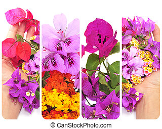 flores, colagem