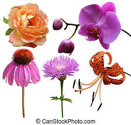 flores, colección