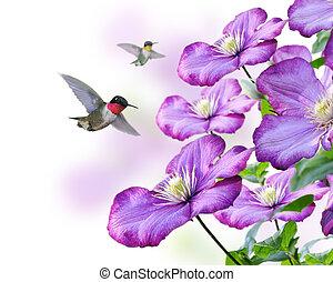 flores, colibrís