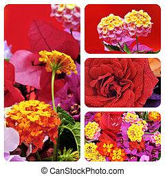 flores, collage