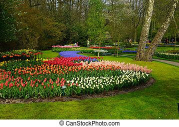 flores coloridas, em, primavera