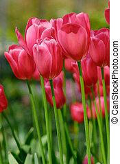 flores coloridas, en, primavera