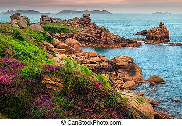 flores, coloridos, frança, atlântico, litoral, ploumanach, oceânicos, penhascos