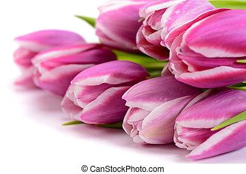 flores, coloridos, grupo