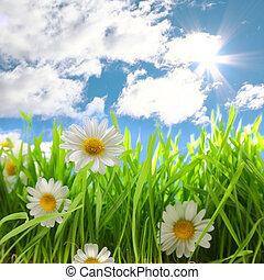 flores, con, herboso, campo, en, cielo azul, y, sol