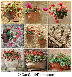 flores, contenedores, collage, geranio, vendimia