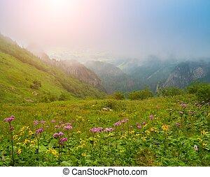 flores, contra, hermoso, vista montaña