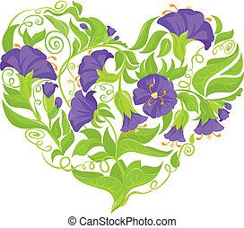 flores, convolvulus, coração, isolado