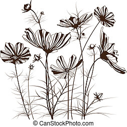 flores, cosmos, vetorial, bipinnatus, jardim