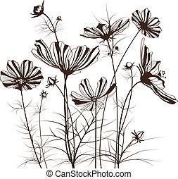 flores, cosmos, vetorial, jardim