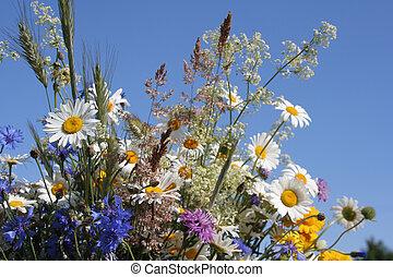 flores, de, a, campo