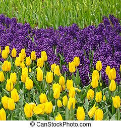 flores del resorte