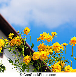 flores del resorte, amarillo
