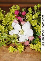flores del resorte, colorido