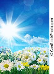 flores del resorte, con, cielo azul