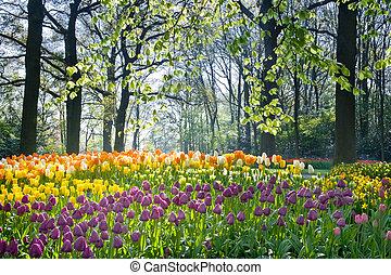 flores del resorte, en, abril, luz