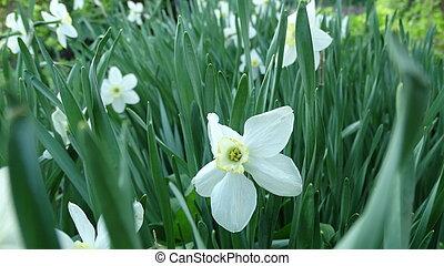 flores del resorte, en el jardín