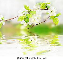 flores del resorte, en, rama, en, agua, ondas