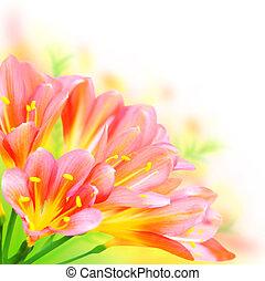 flores del resorte, frontera