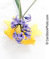 flores del resorte, hyacints, y, narcisos, cicatrizarse, dof