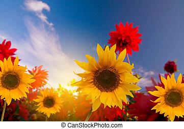 flores del resorte, jardín