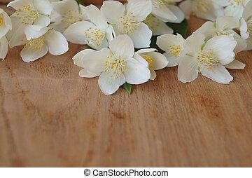 flores del resorte, -, jazmín