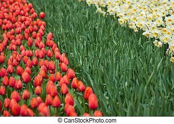 flores del resorte, plano de fondo
