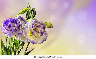 flores, desenho, delicado, eustoma