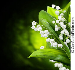 flores, desenho, lily-of-the-valley