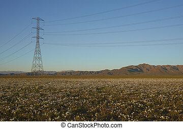 flores, desierto, atacama