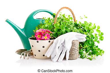 flores, e, verde, plantas, para, jardinagem, com, cultive ferramentas