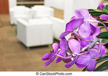 flores, em, escritório, interior